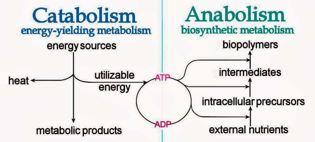 anaerobic exercise metabolism- write to aspire