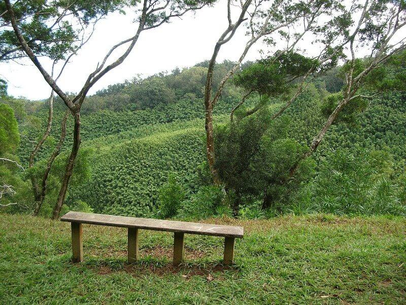 Viewpoint on the Waikamoi Nature Trail, Maui- write to aspire