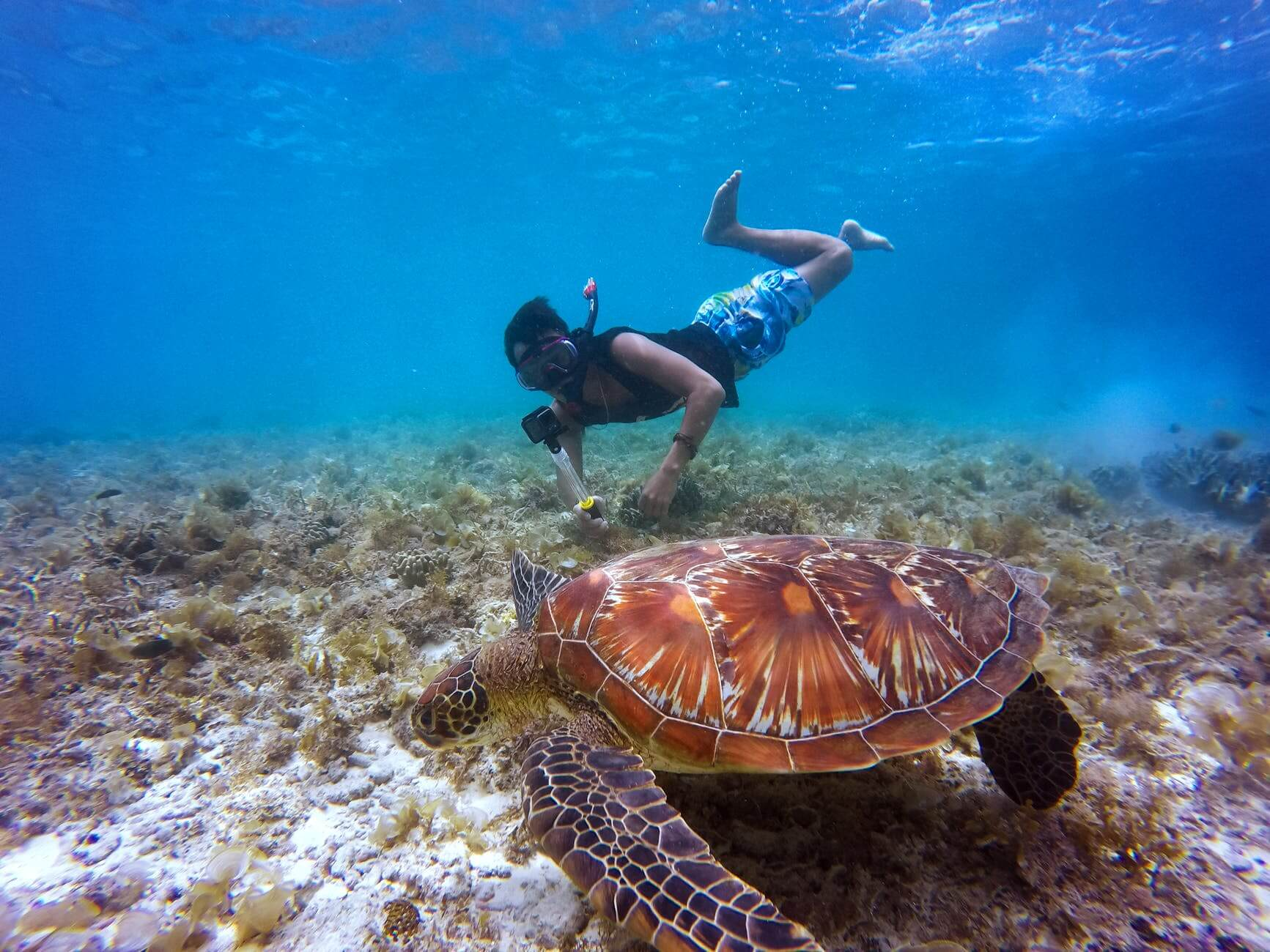 swim with turtles in Maui- Things to do
