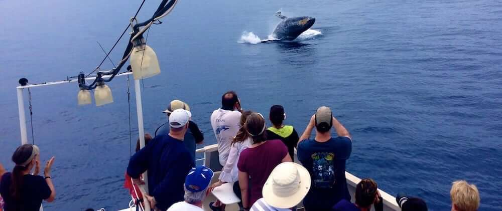 whale watching- things to do in Maui- write to aspire